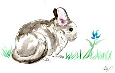 Mother's Day Chinchilla