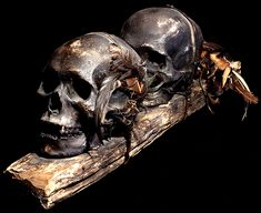 """ "" Human trophy skulls from Asian tribes: Ifugao (Philippines) - Headhunted human trophy skull mounted with bovine jaw Ifugao - Headhunted human trophy skulls Dayak (Borneo) -. Skull Head, Skull Art, Filipino Art, Head Hunter, Animal Bones, Human Skull, Vanitas, Skull And Bones, Memento Mori"