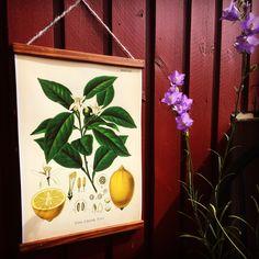 Big lemonposter! Frame handmade in Sweden. Retro feeling on the balcony!