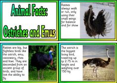 Free printable Ostriches and Emus information fact cards