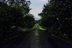 luciole- Pete Mauney-