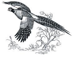 Pheasant hunting clip art 2