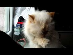 ▶ Cat Cleaning (HD test Fuji HS10) - YouTube