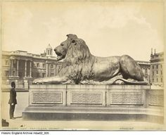 Historic England Archive Content Has Moved Nelson's Column, Trafalgar Square, Historical Images, Lion Tattoo, Lions, Tattoo Ideas, Lion Sculpture, England, Bronze