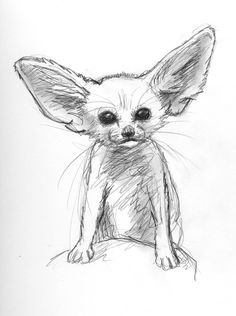 drawing Illustration animals baby pencil Sketch fox desert fennec fox artists on tumblr dana martin