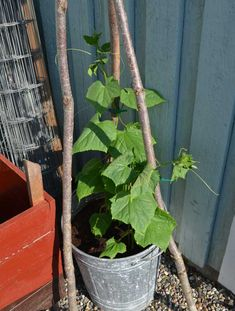 Growing Plants, Gardening Tips, Outdoor, Hem, Hacks, Garden Ideas, Flower, Handmade, Inspiration