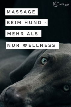 Massage beim Hund – mehr als nur Wellness Goldendoodle, Yorkie, Chihuahua, Tooth Decay In Children, Coconut Oil For Dogs, Dog Care Tips, Dog Hacks, Dog Training Tips, Happy Dogs