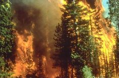 Claim that wildfires are on increase due to 'climate change' is shown to be 'a prescribed result' of climate models