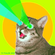 New trending GIF on Giphy. cat crazy internet insane cat gif lasers laser eyes. Follow Me CooliPhone6Case on Twitter Facebook Google Instagram LinkedIn Blogger Tumblr Youtube