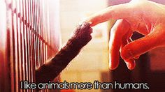 i like animals more than humans