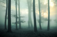 Lumino by Lightsofthenights, ethereal woodland scene in green soft lighting, forest, elegant, fairy wood