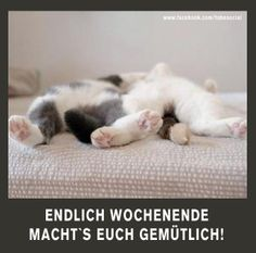 Here at EBENBLATT you& find the coolest and funniest cat shirts for cat lovers, have a look! Weekend Fun, Happy Weekend, Funny Photos, Funny Images, Cat Lover Gifts, Cat Lovers, Funny Animals, Cute Animals, Cat Shirts