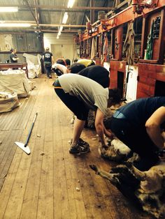 North arm shearing shed - Falkland Islands