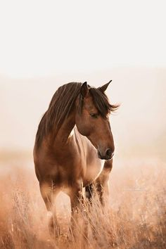 Tiere Do n't chase a horse. Use the time of chasing horses to plant grass. All The Pretty Horses, Beautiful Horses, Animals Beautiful, Cute Animals, Beautiful Horse Pictures, Cute Horses, Horse Love, Equine Photography, Animal Photography
