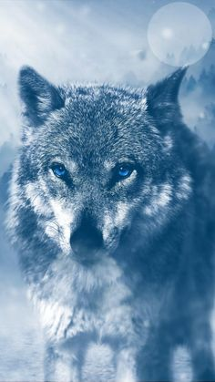 Wolf Wallpaper for iPhone images) - Wolf canvas - Wolf Wallpaper, Animal Wallpaper, Wallpaper Wallpapers, Mobile Wallpaper, Iphone Wallpaper, Beautiful Wolves, Animals Beautiful, Majestic Animals, Wolf With Blue Eyes