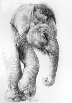 100% of the profits from the sale of this artworks go to conservation initiatives around the world. www.animalworks.com.au Contact animalworksaustralia@gmail.com to purchase