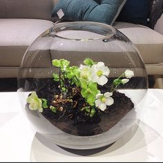 Perfekt för julens alla fina blommor! Våra bollvaser finns i tre olika storlekar: liten ø12cm 119kr, mellan ø22cm 279kr, stor ø33cm 499kr. Finns både i Skrapan & Täby C. #habitatsverige