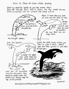 How to Draw Worksheets for The Young Artist: How To Draw A Leaping Orca Killer Whale, Free Printable Worksheet.