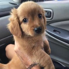 Watch funny and cute dogs and puppies as they are the most lovable pets in the world. Really Funny Dog Videos, Really Cute Puppies, Super Cute Puppies, Cute Dogs And Puppies, Baby Dogs, Pet Dogs, Doggies, Cute Funny Animals, Funny Animal Pictures