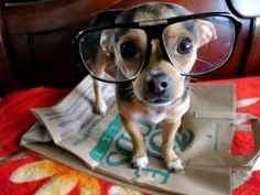 30 Bespectacled Dogs and Cats Looking Cute   Cutest Paw