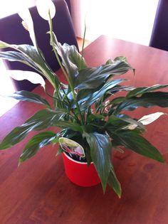love this plant