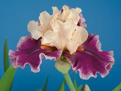 """Passion for Fashion 
