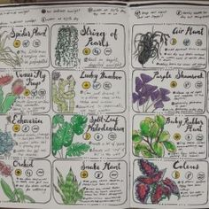 """Finally finished pages three and four of the """"Common House Plants"""" care guide in my grimoire! Botany Books, Common House Plants, Just Add Magic, Witch Spell Book, House Plant Care, Garden Journal, Succulent Gardening, Medicinal Plants, Book Of Shadows"""