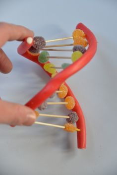 Fun candy DNA model showing the double helix structure of DNA. Use candy to make a fun and easy model of DNA to show how DNA replicates. Apologia General Science, Primary Science, Science For Kids, Learn Science, Forensic Science, Science Education, Life Science, Higher Education, Cool Science Experiments