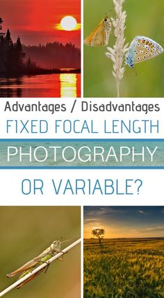 Are you thinking about buying your next camera? The choices are huge and not necessarily simple. Here is an article on the interest to choose a prime lens or a zoom lens ? All the advantages and downsides. Wildlife Photography Tips, Landscape Photography Tips, Photography Basics, Photography Tips For Beginners, Photography Courses, Photography Tutorials, Travel Photography, Learn Photography, Technique Photo