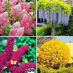 Super ofertă! Plante ornamentale Grădina colorată, set de 4 soiuri | Most often bought GradinaMax