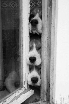 four legs friends