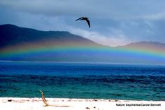 Rainbow and bird #cousinisland #Seychelles