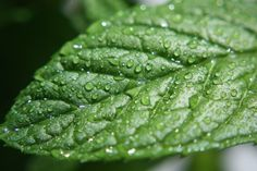 Peppermint isn't just amazing for holiday dishes, it's also one incredibly healing food when consumed in the form of food-grade peppermint oil. Take a look at the amazing improvements t…