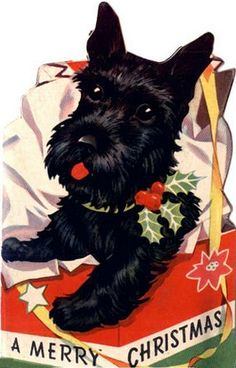 Vintage Christmas card - Scottish Terrier