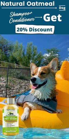 A dog's skin is naturally oily and rough, so they don't need as much conditioning as humans. It makes sense for them to use more shampoo. The following homemade dog shampoo recipes can be used in conjunction with commercial dog shampoos for maximum effectiveness. #homemadeshampoo #shampoo #dogs Homemade Dog Shampoo, Natural Dog Shampoo, Cat Lovers, Dog Cat, Corgi, Conditioner, Shampoos, Pets, Nature
