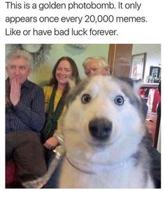 20 Pictures to Make You Laugh Out Loud for Your Friday - Memes Hilarious - Funny Dog Memes, Funny Animal Memes, 9gag Funny, Funny Animal Pictures, Cute Funny Animals, Cute Baby Animals, Funny Cute, Funny Dogs, Nerd Memes