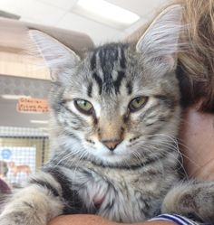 Rebel is a 5-month-old male kitten who is a sweet long-haired tabby. He is neutered, vaccinated and tested. Adoption fee is $60. Apply with Another Chance Animal Welfare League Adoption Center at www.acawl.org. Call 547-7387. Go to www.redding.com for galleries of adoptable pets.