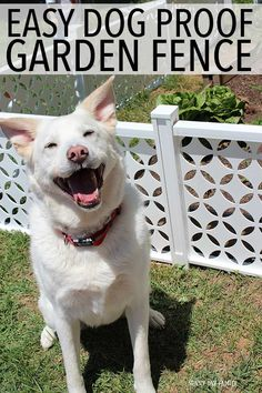 Is your dog getting into your backyard garden? Install this easy garden fencing to keep your dogs away so you can enjoy your garden in peace! Love this gorgeous, afforable, and easy to install option for families with gardens & dogs!  #freedomoasis #ad