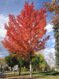 Gorgeous fall foliage at Cheeseman Park