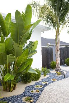I used Mexican pebbles, sand, succulents, cactus, a pumice rock, bird of paradise, Queen palm tree, for modem tropical landscaping