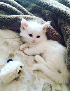 My girlfriends kitten is something else by acopywriter. What you think about?