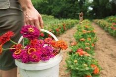 Flower Farm, Flower Power, Flowers, Plants, Farms, Homesteads, Florals, Planters, Flower