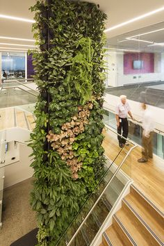 Abbvie Pharmaceuticals – by Vertikal. Extraordinary vertical gardens for… Verticle Garden Wall, Vertical Garden Design, Home Garden Design, Landscape And Urbanism, Landscape Design, Vertikal Garden, Sacred Garden, Vertical Vegetable Gardens, Green Facade