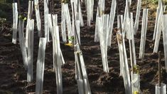 Made by the Forge trees being planted by The Suffolk Wildlife Trust.