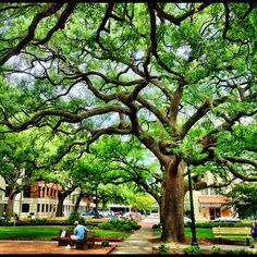 Beautiful Reynolds Square in Savannah