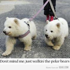 Baby polar bears!!