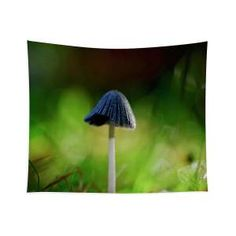 Fallen fungi Tapestry x by Helen Kelly. Our premium tapestries are available in three different sizes and feature incredible artwork on the top surface. Chris Cornell Thank You, World Tapestry, Traditional Frames, My Favourite Subject, Another World, Wall Tapestries, Wall Spaces, Basic Colors, How To Be Outgoing