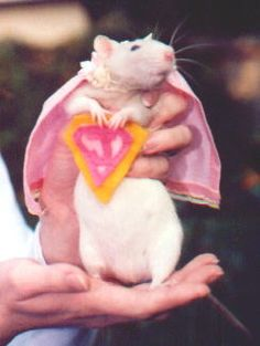 costumes for rats - Google Search