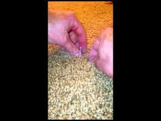 The Best How to repair carpet with pet damage video check it out! You don't have to replace your damaged carpet it can be fixed. Awesome