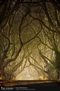 enchanted-thumb  Wonders of Nature: Enchanted Pathways